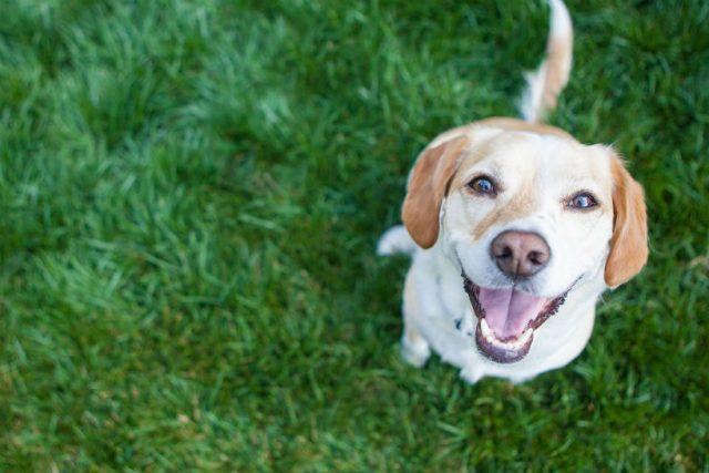 Дъвка и куче за здраво сърце